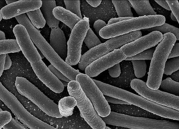 Microbioom